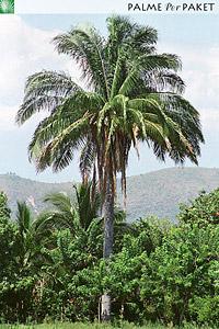 Erwachsene Pflanze am Naturstandort