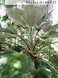 Erwachsene Pflanze