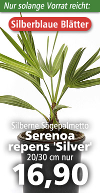 Serenoa repens Silver