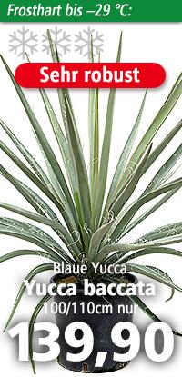 Yucca baccata