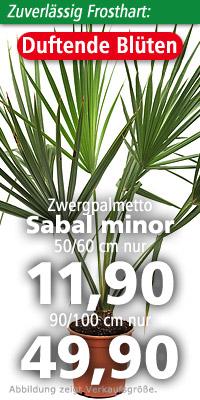 Sabal minor