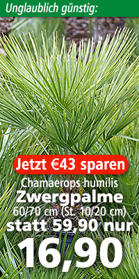 Chamaerops humilis