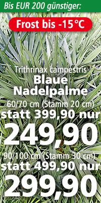Trithrinax campestris